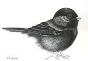 "TAYLOR; Chickadee; ink drawing on paper mounted on wooden cradle, finished with resin; 3x4""; SOLD"