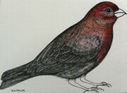 "TAYLOR; ; House Finch; ink drawing on paper mounted on wooden cradle, finished with resin; 3"" x 4"" SOLD"