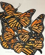 TAYLOR; Monarchs, ink and watercolour on paper SOLD