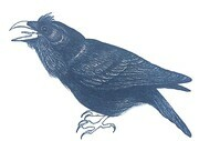 "TAYLOR; ; Noisy Raven; ink drawing on paper mounted on wooden cradle, finished with resin; 3"" x 4"" SOLD"