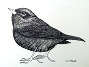 "TAYLOR; Warbler; ink drawing on paper mounted on wooden cradle, finished with resin; 3"" x 4"" COMMISSION"