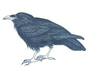 "TAYLOR; ; Wise Old Raven; ink drawing on paper mounted on wooden cradle, finished with resin; 3"" x 4"" SOLD"